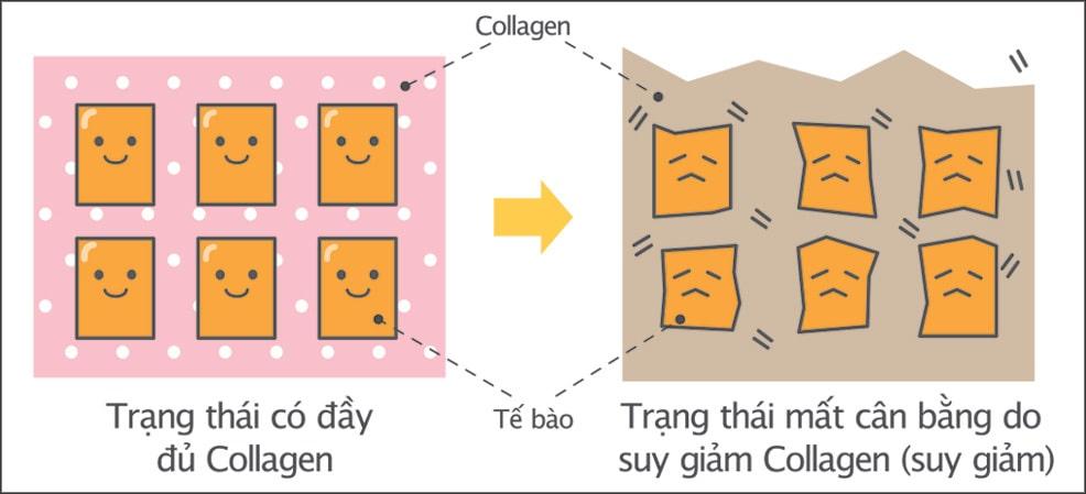 Hằng hà sa số thắc mắc khi dùng Collagen