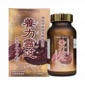 Nấm linh chi đỏ Nichiei Bussan Nourishing Reishi 300 viên (Nội địa Nhật Bản)